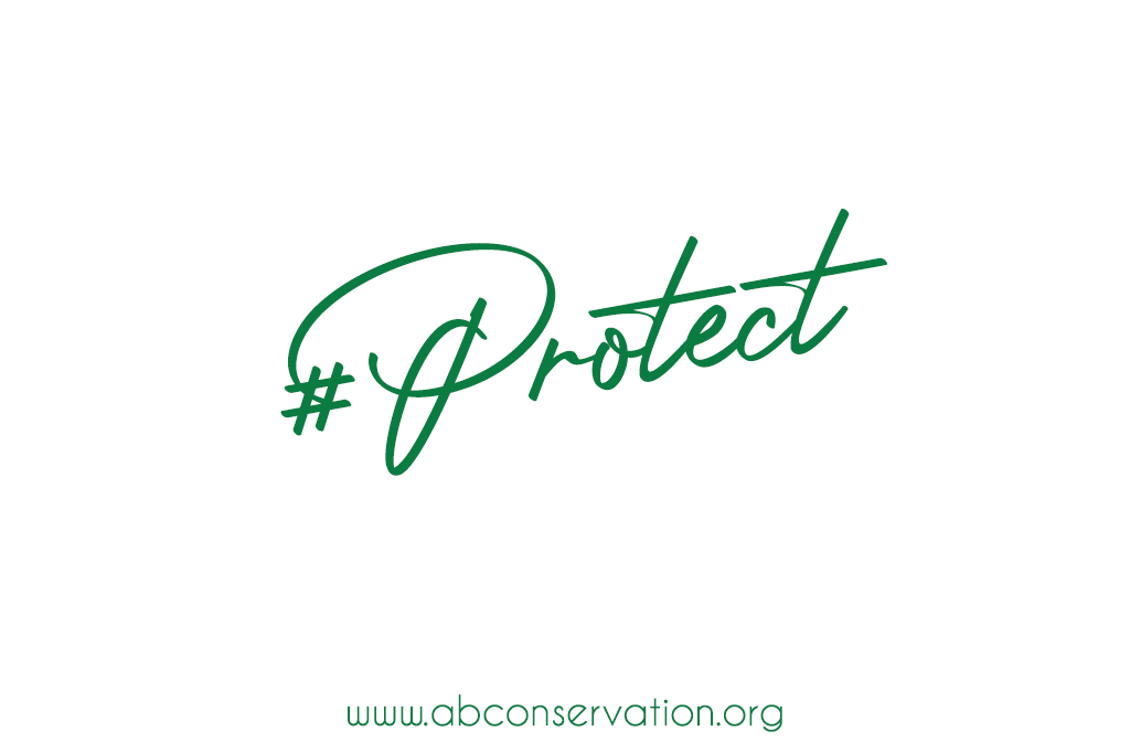 Asso-Protect