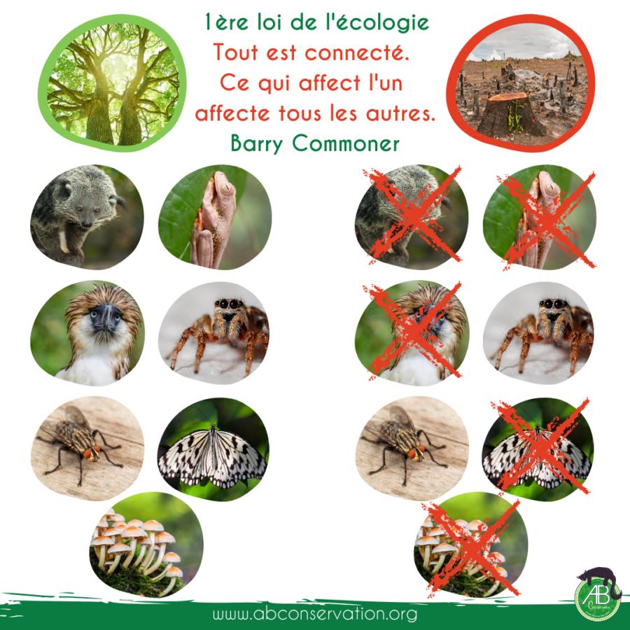 Les bienfaits apportés par la biodiversité